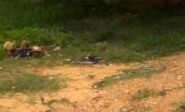 Três caçadores são encontrados mortos no interior do Piauí