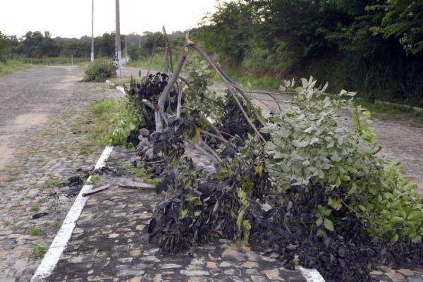 Vândalos destroem plantação de Ipê na cidade de Agua Branca
