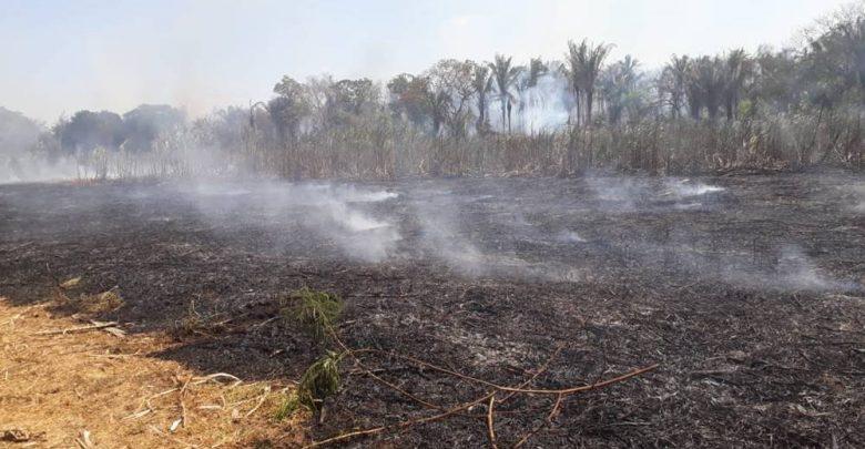 Canavial da Cachaça Lira é destruído em incêndio e empresário faz apelo