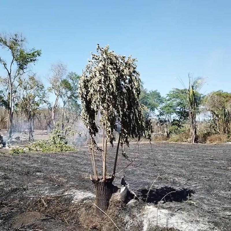 Direção do Eco Parque Lira divulgam mensagem de agradecimento a toda população