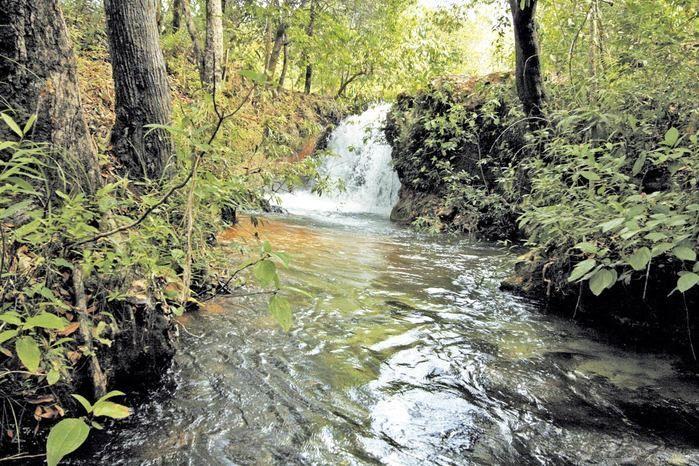 Parque das Nascentes: deslumbramento em águas