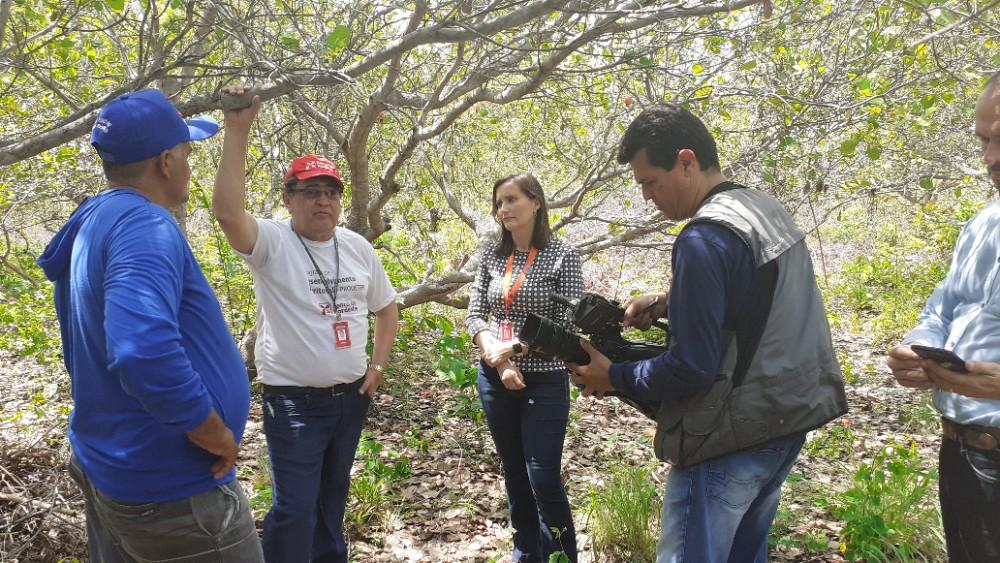 Equipe do Clube Rural gravou matéria em Agricolândia sobre a colheita do Caju