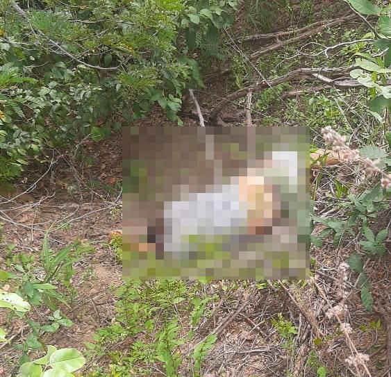 Irmão de prefeita de cidade do Piauí é encontrado morto em estrada
